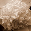 Sepia Series - Peony by Arlane Crump