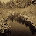 Sepia Snowfall On Boot Creek by Dale Kauzlaric