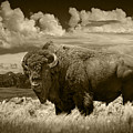 Sepia Toned Photograph Of An American Buffalo by Randall Nyhof