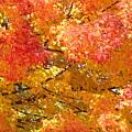 September Leaves by Tammy Mutka