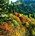 September Mountainside by Kevin  Sherf