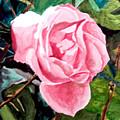 September Rose by Jim Phillips