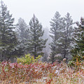 September Snow Squall by Carolyn Derstine