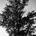 September Tree ... by Juergen Weiss