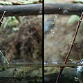 Sequence Archer Fish Jumping Out Of Water To Grab A Insect by Dan Friend