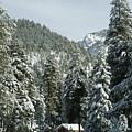 Sequoia National Park 7 by Masha Batkova