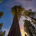 Sequoia Sunrise by Phil Abrams