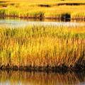 Serene Grasses by Sybil Staples