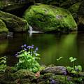 Serene Green by Bill Wakeley