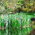Serene Iris by Donna Bentley