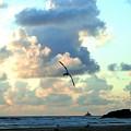 Serene Sunset by Will Borden