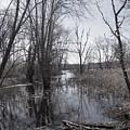 Serene Swampy River by Beth Myer