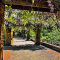 Serene Walkway  by Douglas Barnard