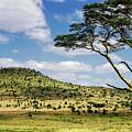 Serengeti Classic by Vicki Jauron