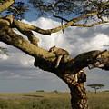 Serengeti Dreams by Rhoda Gerig