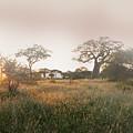 Serengeti Sunrise by Joseph G Holland