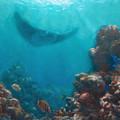 Serenity - Hawaiian Underwater Reef And Manta Ray by Karen Whitworth