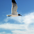 Serenity Seagull by Marie Hicks