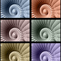 Series Of Sea Shells by Phil Perkins