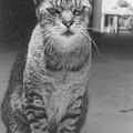 Serious Cat Model by Liza Beckerman
