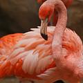 Serious Flamingo by Teresa Blanton