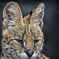 Serval Portrait by Maggy Marsh