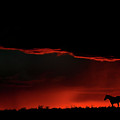 Set Sun Silhouetting Horse On Saskatchewan Ridge by Mark Duffy