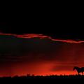 Set Sun Silhouetting Horse On Saskatchewan Ridge by Mark Duffy