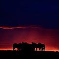 Set Sun Silhouetting Horses On Saskatchewan Ridge by Mark Duffy