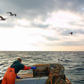 Setting Lobster Traps In Chatham On Cape Cod by Matt Suess