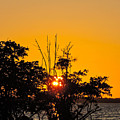 Setting Mangrove Sun by Marilee Noland