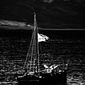 Setting Sail by  Kelly Hayner