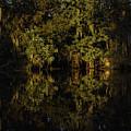 Setting Sun In Maurepas Swamp by Richard Waller