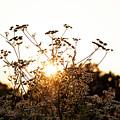 Setting Sun by Jeff Wilson