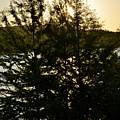 Setting Sun Through A Cypress Tree by Don McAllister