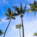 Seven Palms Of Paradise by Robin Krueger