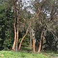 Seward Park Trees by Brenda Berlin