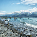 Seward Seashore by Belinda Greb