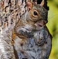 Sexy Squirrel by Bob Orsillo