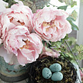 Shabby Chic Peonies With Bird Nest Robins Eggs - Summer Garden Peonies by Kathy Fornal