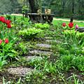 Shade Garden 2  by September  Stone