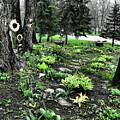 Shade Garden by September  Stone