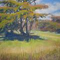 Shade by Shirley Braithwaite Hunt
