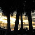 Shaded Palms by Ric Schafer