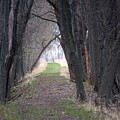 Shaded Walk by Linda Kerkau