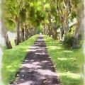 Shaded Walkway To Princeville Market by Paulette B Wright
