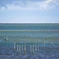 Shades Of Blue On The Horizon by Paula OMalley