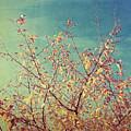 Shades Of Fall by Sylvia Coomes