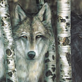 Shades Of Gray by Wayne Pruse