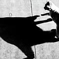 Shadow Cat by Scott Sawyer